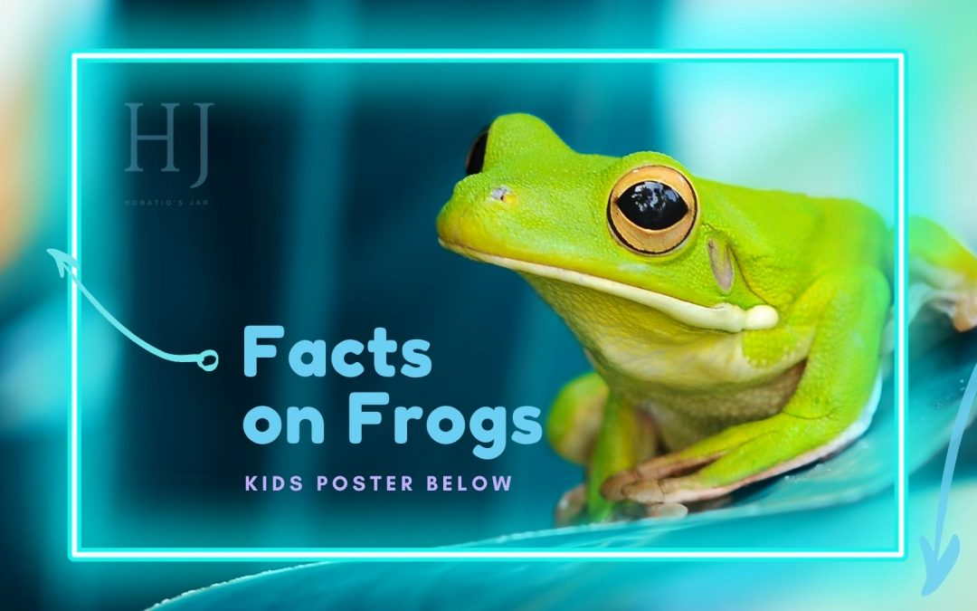 Facts on Frogs – Fun Kids Poster