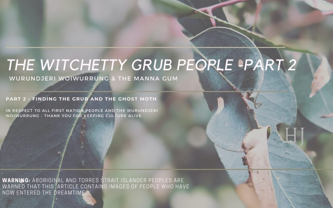 The Witchetty Grub People & The Manna Gum – Part 2